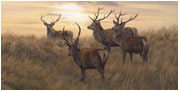 mammal-pictures - red deer