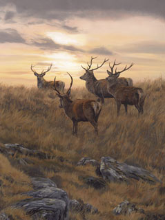 Original wildlife paintings for sale