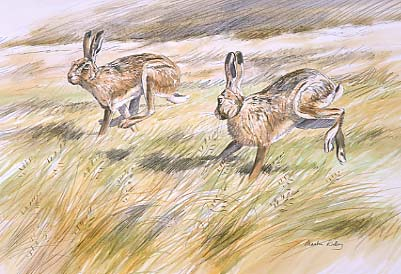 Hare paintings: A painting of brown hares  by Martin Ridley