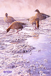 British Bird Artist Martin Ridley: ENTER TO VIEW PICTURES AND PAINTINGS OF BRITISH BIRDS