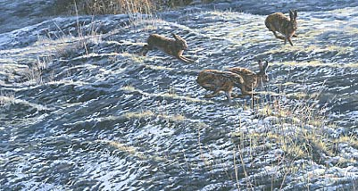 Hares paintings: A painting of brown hares chasing