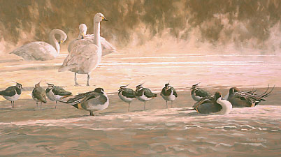 An oil painting of Bewick's swans, Lapwing and Pintail in rising mist by wildlife artist Martin Ridley