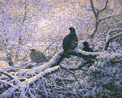 wildlife art paintings: An oil painting of black grouse roosting in snow covered branches