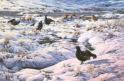 A painting of a snow covered black grouse lek
