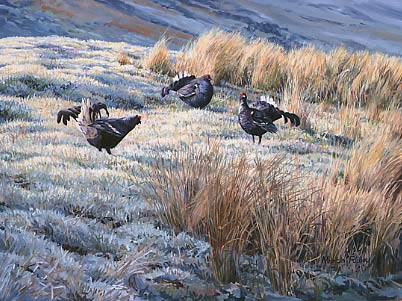 A painting of three lekking black grouse