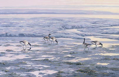 Wildfowl geese paintings: Painting of pale-bellied brent geese