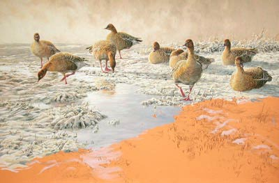 Goose Paintings: Wildlife Art in Progress, painting of pink-footed geese, Anser brachyrhynchus: new wildlife paintings in oils