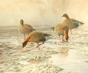 Goose Paintings: Painting of pink-footed geese, Anser brachyrhynchus: new wildlife paintings in oils by artist Martin Ridley