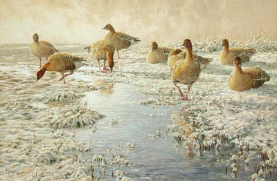 Goose Paintings: Wildlife Art in Progress, painting of pink-footed geese, Anser brachyrhynchus: new wildlife paintings