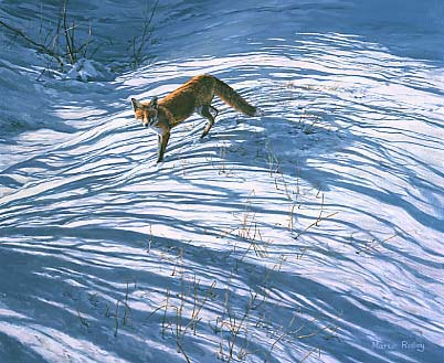 Wildlife Art: Fox in snow by Martin Ridley