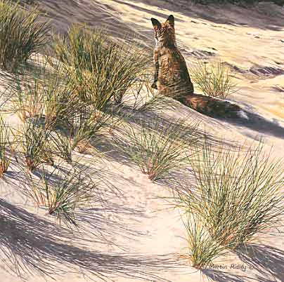 Original Wildlife Art : Red fox in the sand dunes