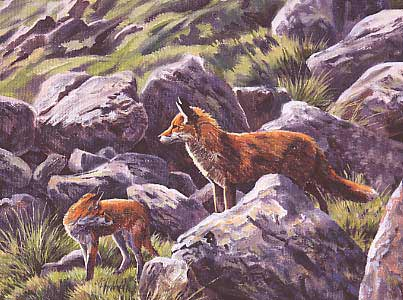Wildlife Art : Dog fox standing guard by Martin Ridley