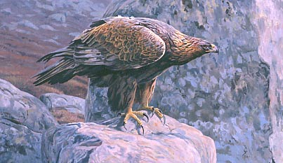 Birds of prey paintings: peregrine falcons, eagles, kites ...