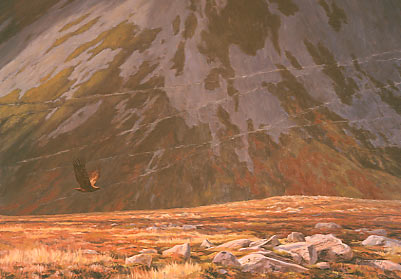 Wildlife Art : Painting of a golden eagle, Aquila chrysaetos in flight with a backdrop of dramatic scree slopes