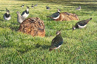Hare paintings: Brown hares, lapwing and grey plover  by Martin Ridley