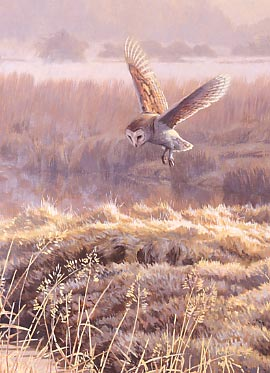 Wildlife Art : Detail from the painting Hovering Barn Owl, Tyto alba by Martin Ridley