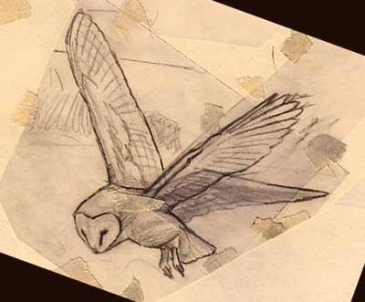 Wildlife Art : Barn owl, Tyto alba sketch by Martin Ridley