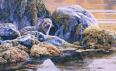 Wildlife Art : Otter by Martin Ridley
