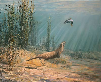 Wildlife paintings: An underwater view of an otter chasing a sea trout, oils by Martin Ridley