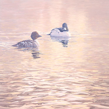 A painting of a pair of goldeneye, wildfowl