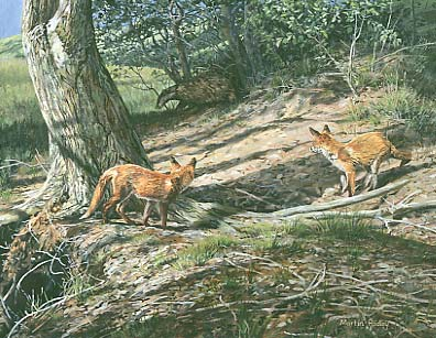 Original Wildlife Art : Badger and red fox cubs