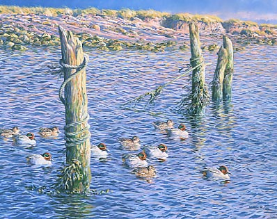 Wildlifeart for sale: A raft of teal by Martin Ridley