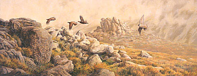 Wildlife Art : Painting of a peregrine falcon,  Falco peregrinus chasing red grouse by Martin Ridley