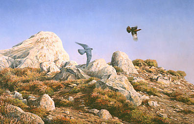 Wildlife Art : Peregrine falcon,  Falco peregrinus chasing a red grouse