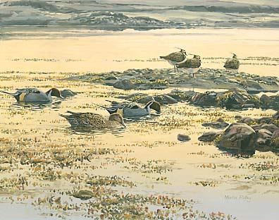 Wildfowl Paintings: Pintail and lapwings by Martin Ridley