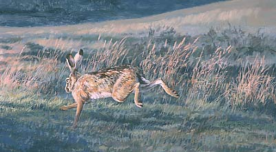 Hare paintings, Lepus europaeus: Painting of brown hare, Lepus capensis by Martin Ridley