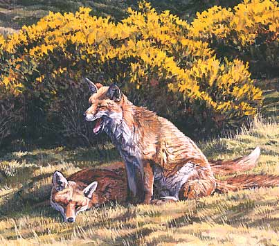 Wildlife Art: Foxes by Martin Ridley
