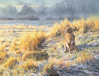 Hare paintings: Painting of brown hares, Lepus europaeus