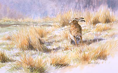 Hare paintings: Painting of a brown hare, Lepus capensis enjoying the sun by martin ridley