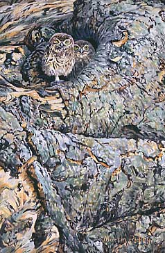 Wildlife Art :Young little owls