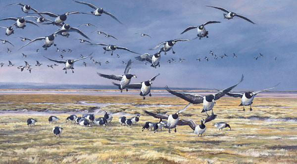 Barnacle Geese Print - Reproduced from an original oil painting