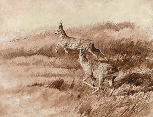 Chasing Roe Bucks Print for Sale - Two Roe Bucks Prints on Canvas by Martin Ridley