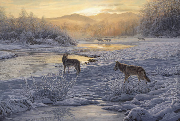 Wolves Print - A pack of wolves in a snowy landscape is preparing to cross a river. Scotland 1000 years ago. Reproduced from a wolf painting by Martin Ridley