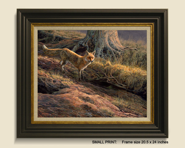 Fox Framed Print for Sale