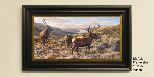 Red Deer Stags Print - Framed print view from Ben Resipole above Loch Sunart
