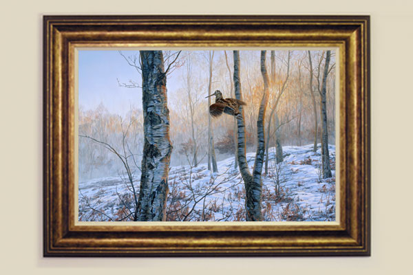 Woodcock Framed Print for Sale
