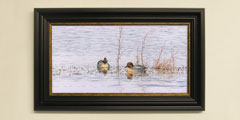 Framed ducks - drake-teal print for sale