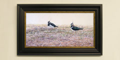 Framed lapwings print for sale