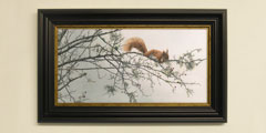 Framed red squirrel print for sale