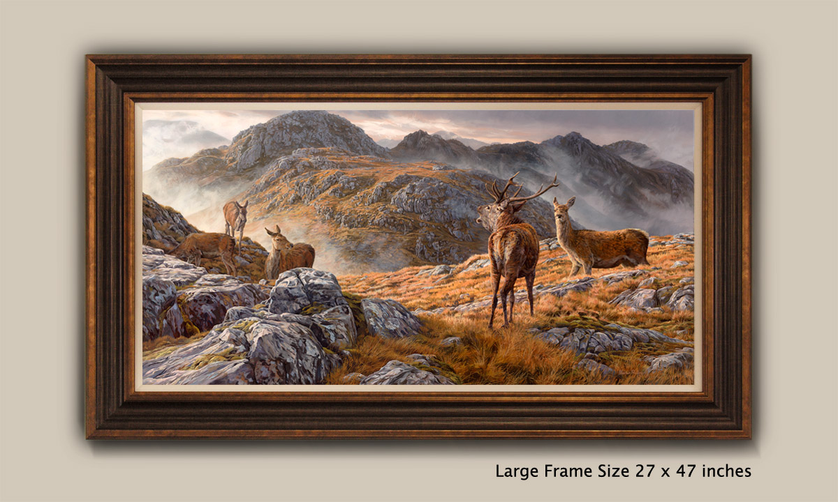 Framed Print - Roaring red deer stag with hinds. Druim Fada above Loch Hourn near Corran and Arnisdale in the Scottish Highlands.