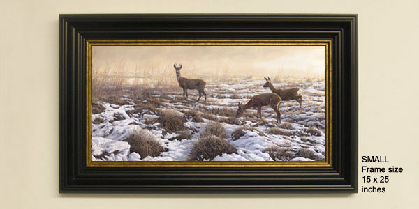 Roe deer print from an oil painting by Martin Ridley. Roe deer, a roe buck and two does crossing a snow covered marsh.