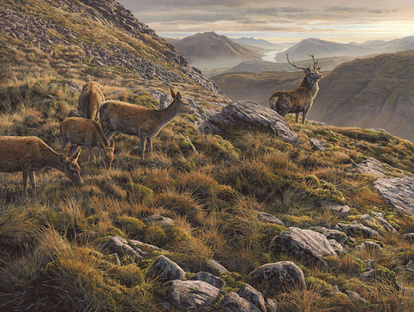 Oil painting by Martin Ridley. Red deer stag with hinds on Beinn Maol Chaluim above Loch Etive looking down Glen Etive to Ben Cruachan in the Scottish Highlands.
