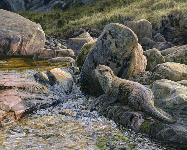 European Otter Print - Canvas Reproduction