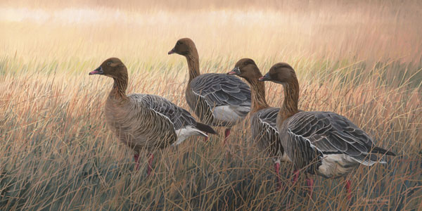 Pink-footed Geese Print - Canvas Reproduction