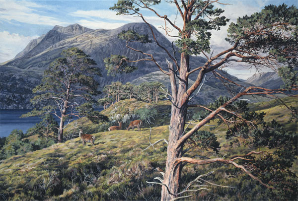 Red Deer Hinds Print - Oil painting of red deer hinds by Loch Maree and Slioch  reproduced as a canvas print