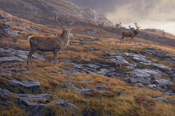 Red Deer Print - Oil painting of red deer stags at the end of the day reproduced as a canvas print